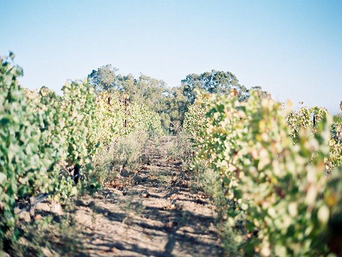 Mountain Winery CA Wedding0012