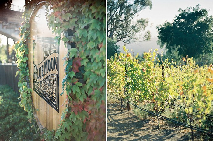 Mountain Winery CA Wedding0028