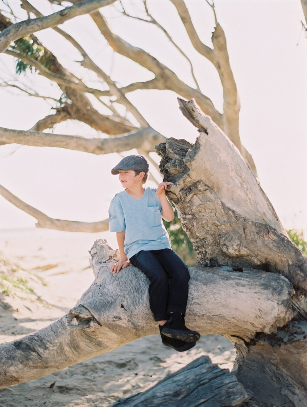 Little boy sitting on tree