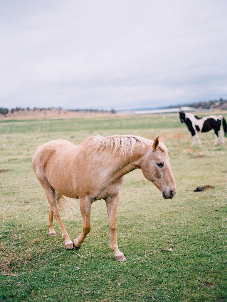 Brasada Ranch Landscape